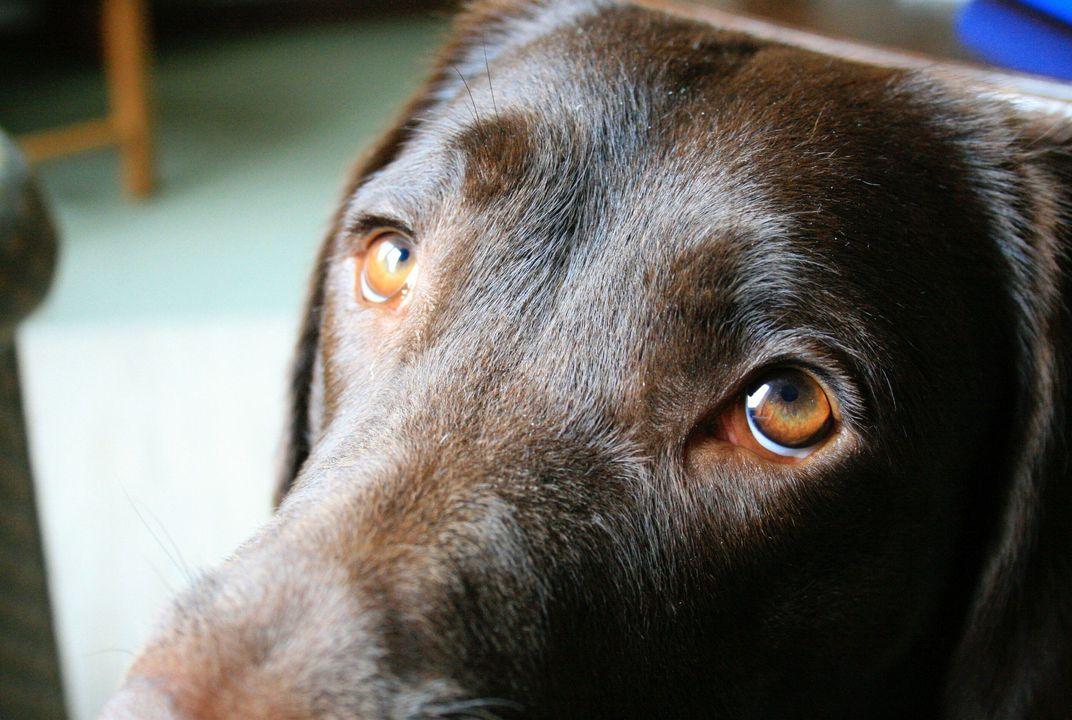 Teste para saber se meu cachorro enxerga bem e quando levá-lo ao oftalmologista 17
