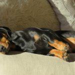 Pancreatite em cães: sintomas e tratamento 1