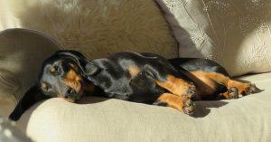 Pancreatite em cães: sintomas e tratamento 2