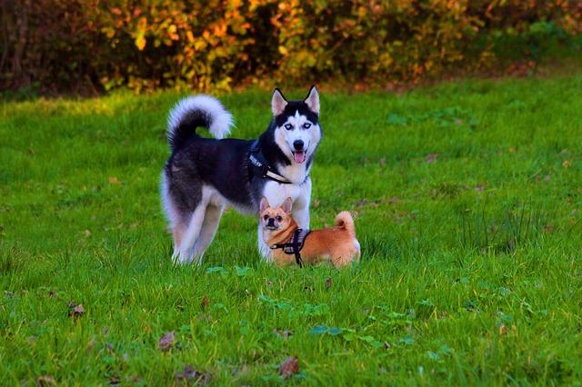 8 razões possíveis para a perda excessiva de pelo do seu cão 1