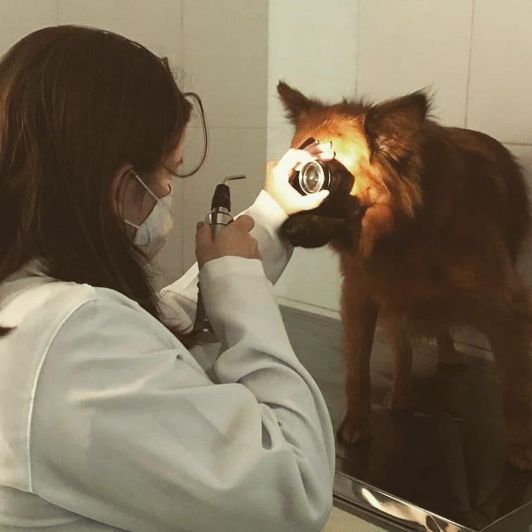 Veterinária Kethye Priscila Ortêncio (CRMV 25832) 1