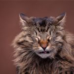 Alergias em Gatos - sintomas, causas tipos e tratamento 1