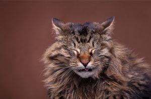 Alergias em Gatos - sintomas, causas tipos e tratamento 3