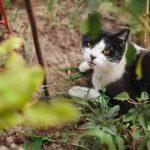 Cegueira em gato: tipos, causas e tratamentos 2