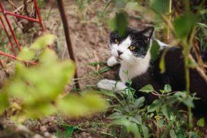 Cegueira em gato: tipos, causas e tratamentos 5
