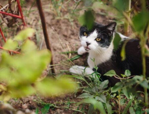 Cegueira em gato: tipos, causas e tratamentos