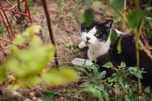 Cegueira em gato: tipos, causas e tratamentos 9