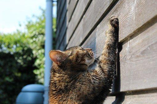 Como escolher e usar um poste para gato arranhar 1