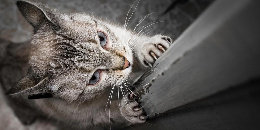 Como escolher e usar um poste para gato arranhar 2