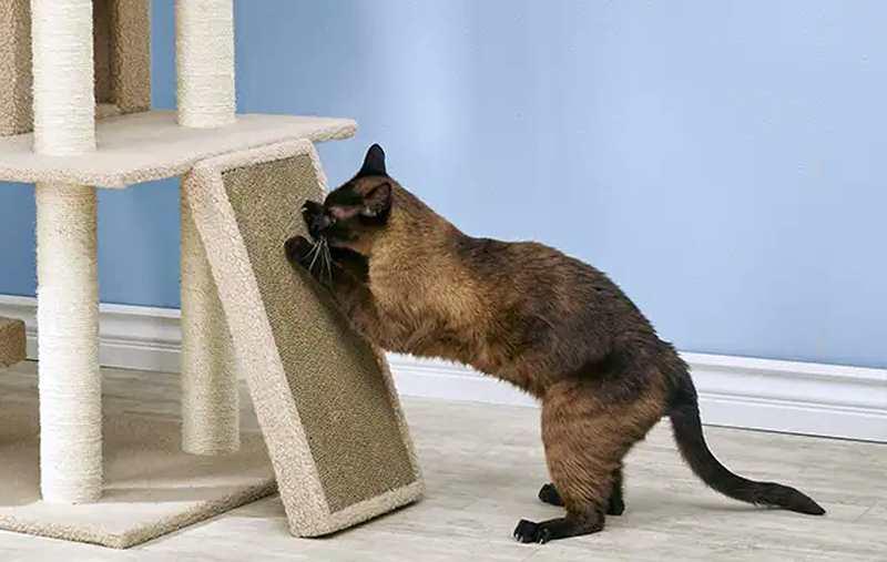 Como escolher e usar um poste para gato arranhar 6