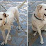 Cachorro mancando: causas e tratamento da para mancando em cães, seja a pata dianteira ou traseira 5