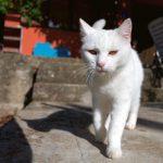 Posso passar protetor solar em gatos? 15