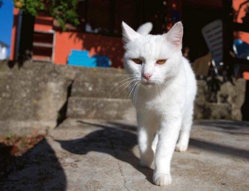Posso passar protetor solar em gatos?