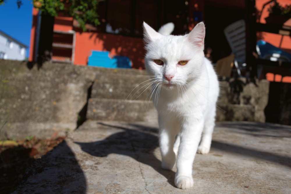Posso passar protetor solar em gatos? 2