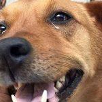 Problemas de visão em cães e sinais de cegueira 6