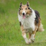 Por que meu cachorro está tremendo? 6 causas comuns para os calafrios 1