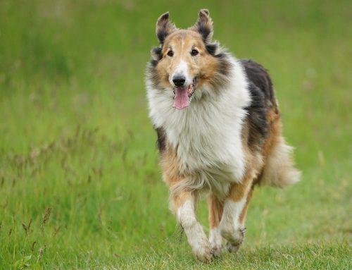 Por que meu cachorro está tremendo? 6 causas comuns para os calafrios