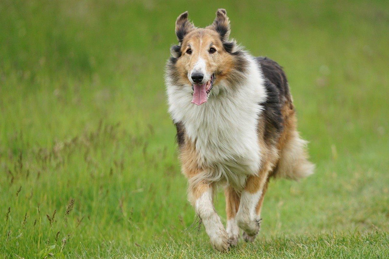 Por que meu cachorro está tremendo? 6 causas comuns para os calafrios 9