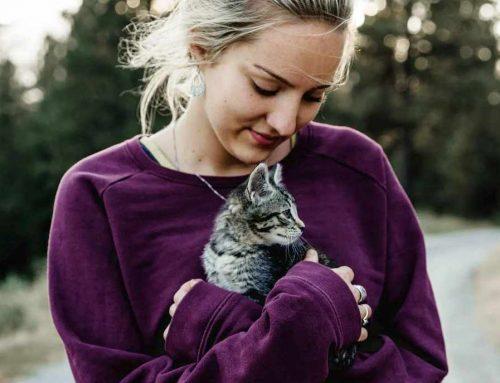 Tudo o que você precisa saber antes de comprar ou adotar um gato