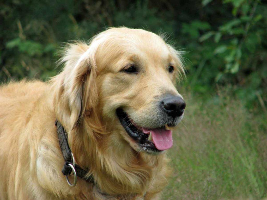 Cuidados ao levar seu cachorro à dermatologista veterinário 19