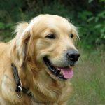 Cuidados ao levar seu cachorro à dermatologista veterinário 3