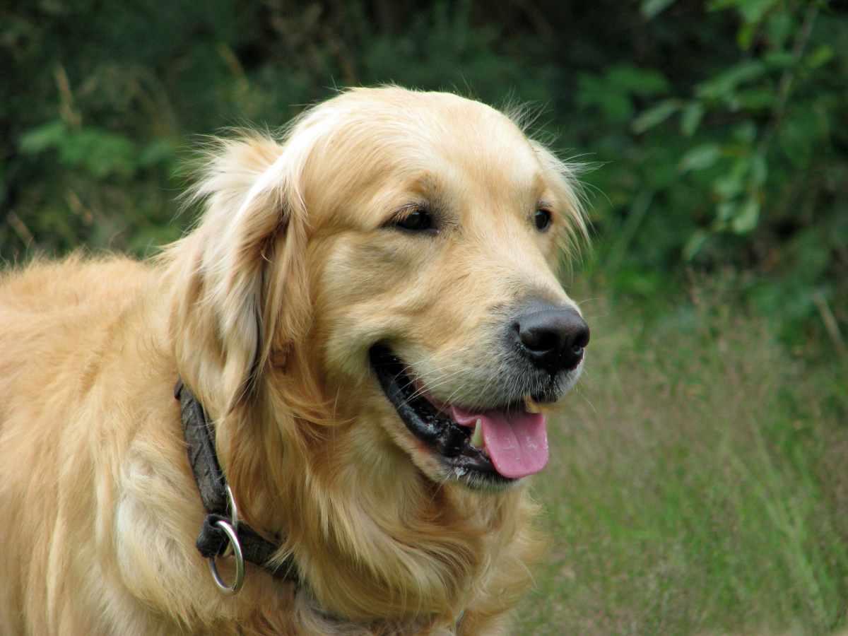 Cuidados ao levar seu cachorro à dermatologista veterinário 13
