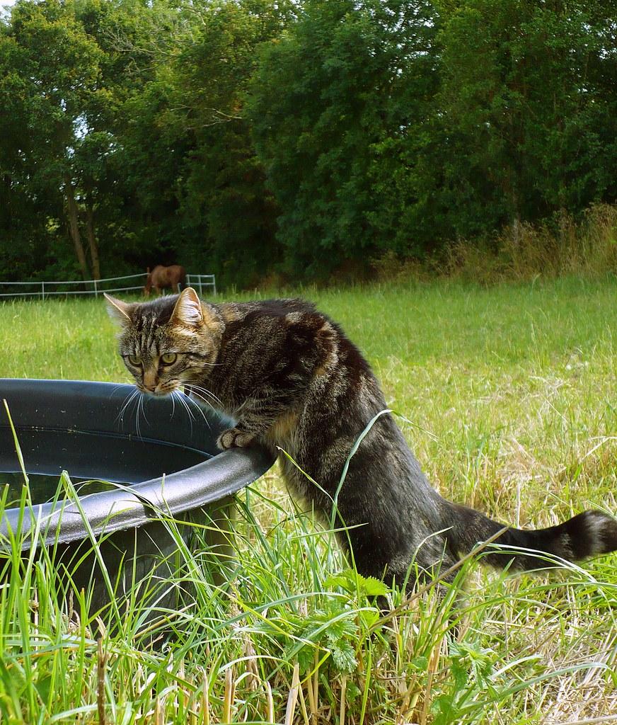 Como estimular o gato a beber água? Como dar água para gato doente 4