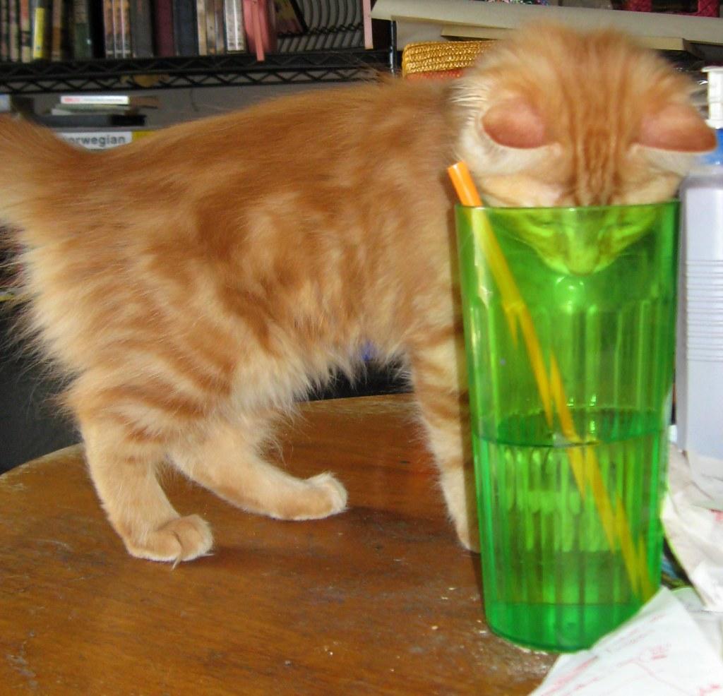 Como estimular o gato a beber água? Como dar água para gato doente 5