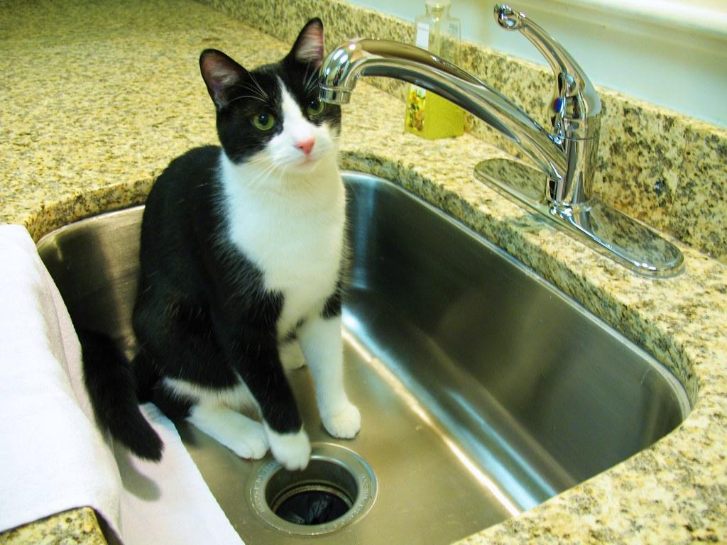 Como estimular o gato a beber água? Como dar água para gato doente 1