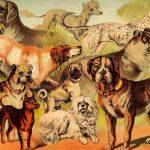 Quantas raças de cachorro existem? 2