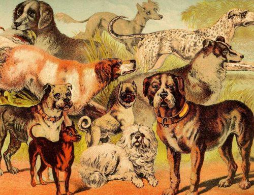 Quantas raças de cachorro existem?