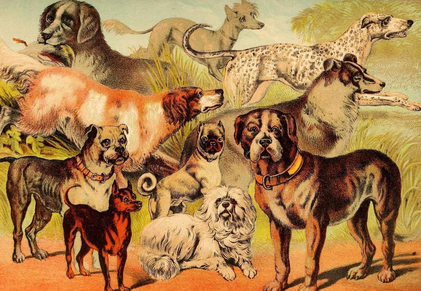 Quantas raças de cachorro existem? 10