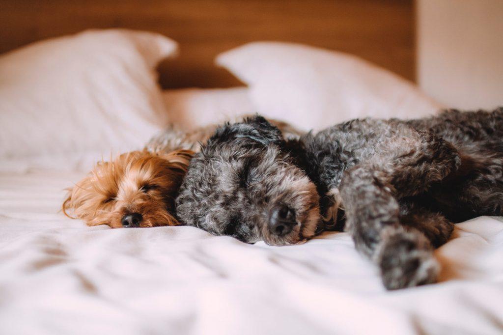Cachorro em sono profundo, difícil de acordar? O que saber sobre o sono dos cães 2