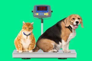Cães e gatos obesos: como controlar e prevenir o ganho de peso em seu animal de estimação 11