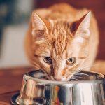 Sete alimentos que seu gato não deve comer 7