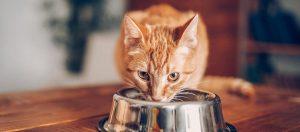 Sete alimentos que seu gato não deve comer 8