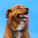 Alimentação para cachorro com pancreatite 6