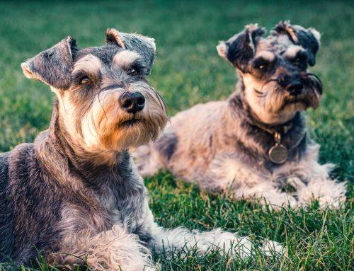 Diarreia com sangue em cachorro: causas, perigo e tratamentos