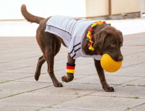 Hipoglicemia em cães: tudo o que você precisa saber