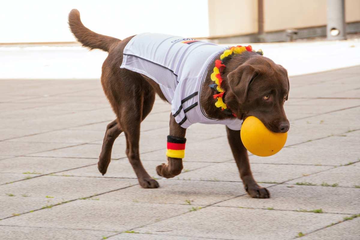 Hipoglicemia em cães: tudo o que você precisa saber 1